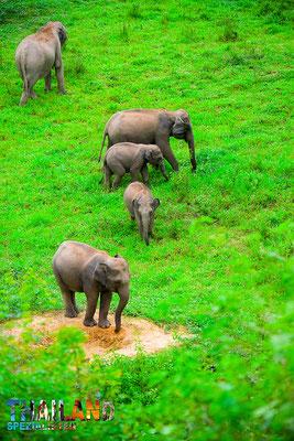 Elefanten frei beobachten