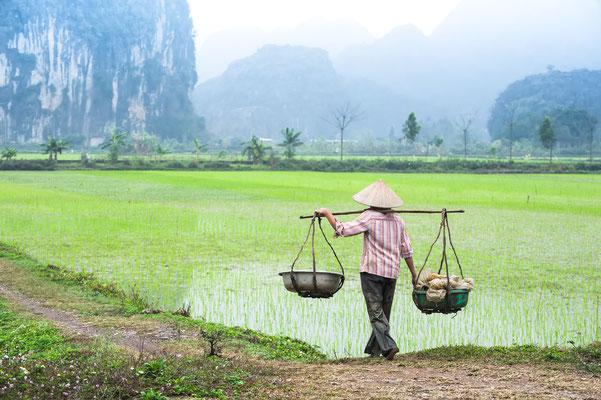 Farmer in Ninh Binh