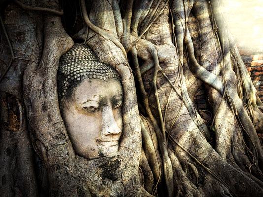 Wat Mahathat - Buddha-Kopf in Baumwurzeln Ayutthaya