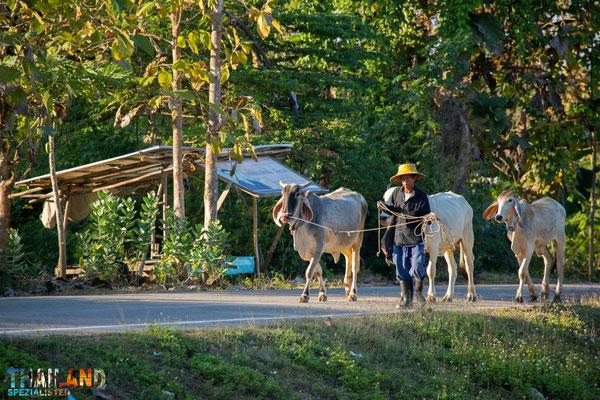 Umgebung in Phayao