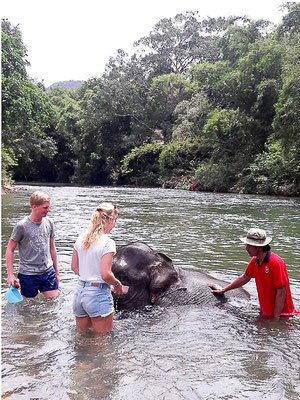 Khao Sok Nature Resort - Elephant Bathing
