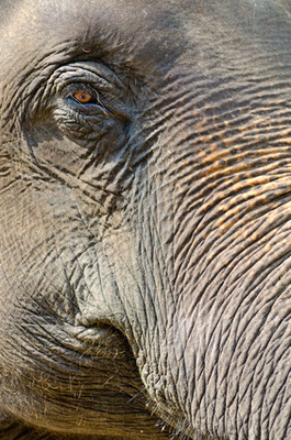 Elefantenschule in Lampang
