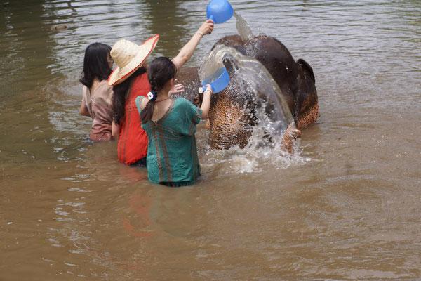 Baden im Fluss. Das lieben die Elefanten
