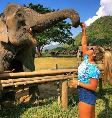 Elefant füttern