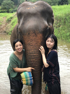 Ran Tong - ein wirklich nachhaltiges Elefanten-Camp in Chiang Mai