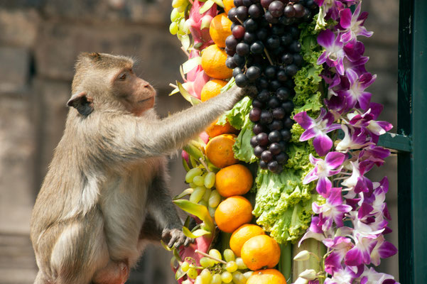 Monkey Buffet Festival in Lopburi