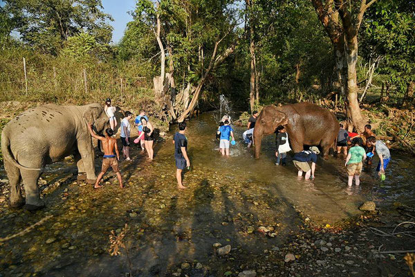 Gemeinsames Baden mit den Elefanten