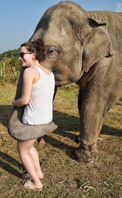 Elefanten hören, riechen und fühlen