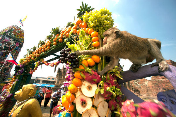 Monkey Festival in Lopburi