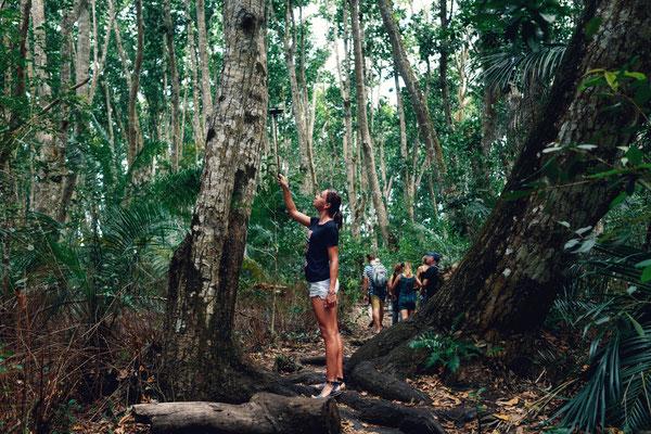 Trekking im thailändischen Wald