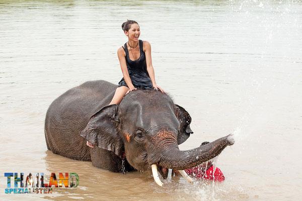 Während einer Rundreise im Norden von Thailand, gehört ein echtes Elefanten-Erlebnis natürlich dazu.