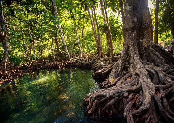 Mangrovenwald Süd-Thailand