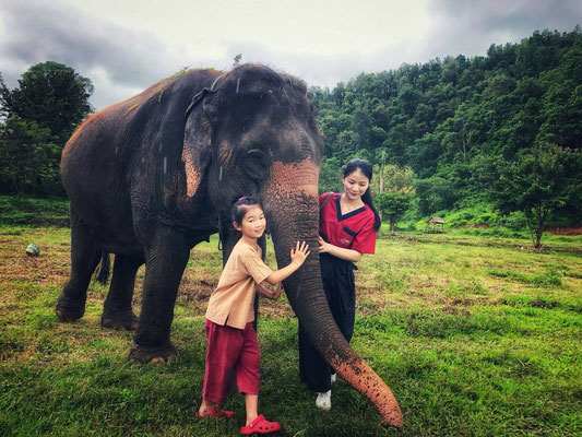 Ehrlich, Sie müssen dies erleben. Nachhaltiger Umgang mit Elefanten. Es sind so beeindruckende Tiere