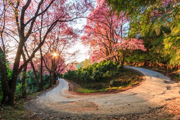 Wundervolle Landschaften - Sakura Flower