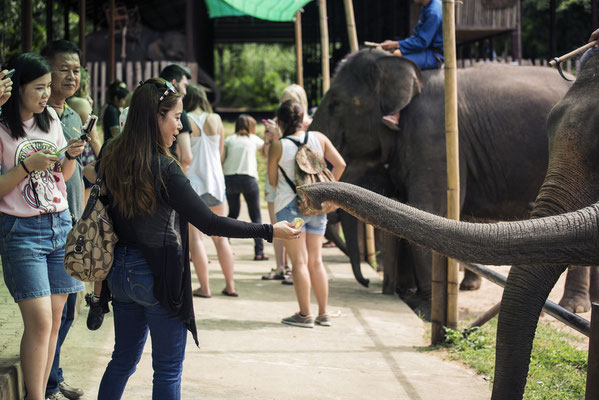 Urlauber füttern die Elefanten in Lampang