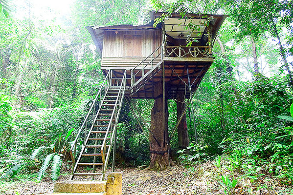 Jungle Family Tree House