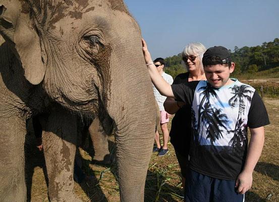 Blinde Menschen und Elefanten - Elefanten haben ein gemtüliches Gemüt