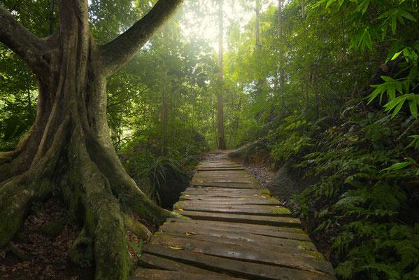 Thailand Trekking im tiefen Dschungel