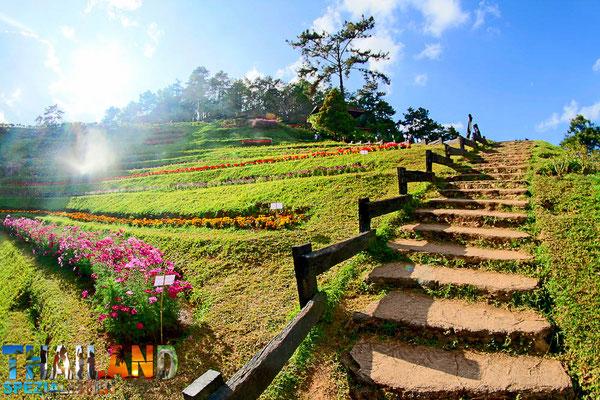 Blumen-Wanderweg im Huai Nam Dang Nationalpark