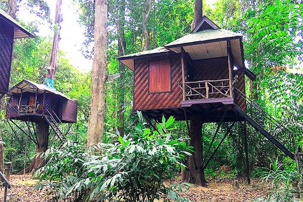 Paradiese Tree House