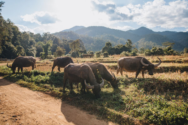Provinz Tak Thailand