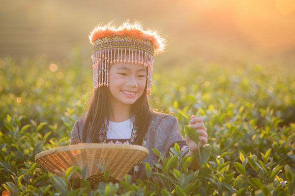 Goldenes Dreieck Thai Frau