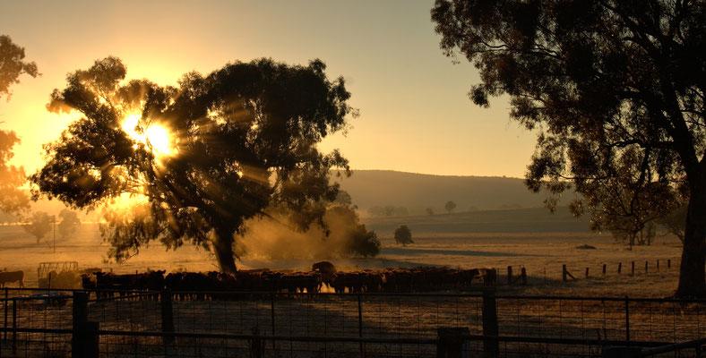 Australische Rinderfarm