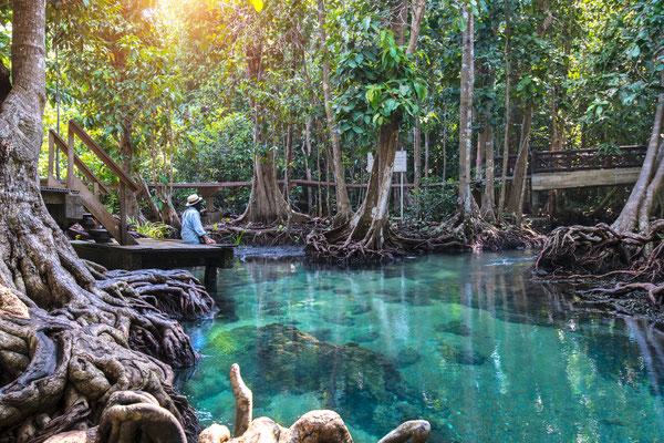 Emerald Pool im Mangrovenwald