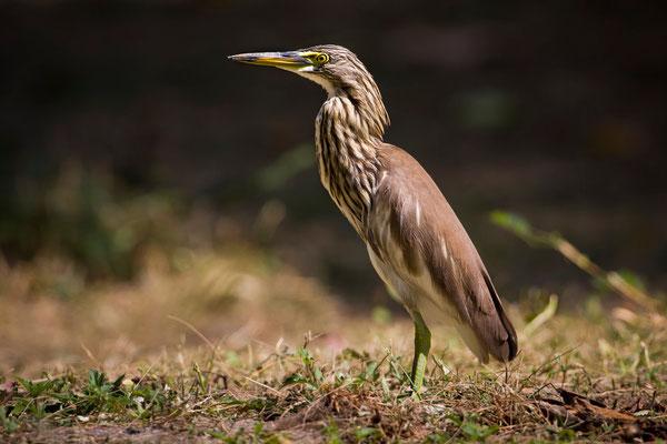 Vogelbeobachtung auf Koh Adang