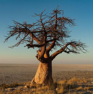 2008 Botswana
