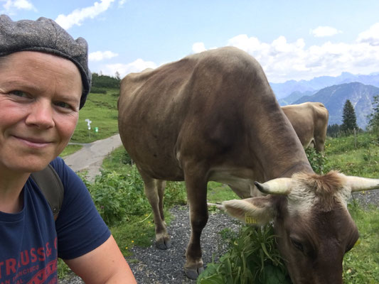 Rinder auf dem Fellhorn in Oberstdorf
