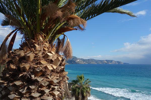 Palmen und Strand Nerja