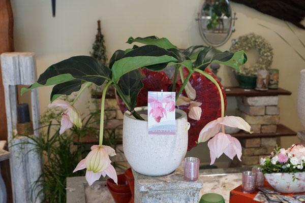 Langlebige Blumengestecke und dekorative Blumengrüße - Blumen Schönwalde-Glien