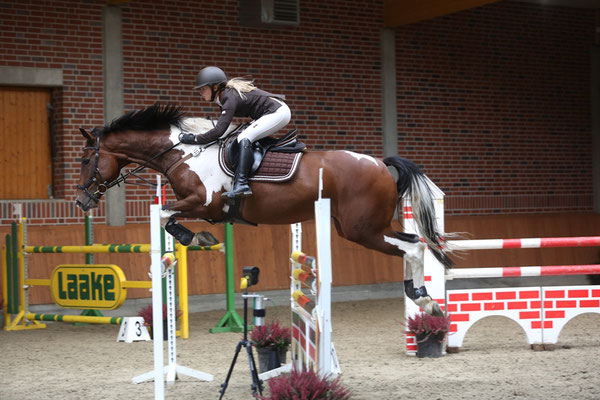 ENGGÅRDENS INTERPUS, approved stallion by Clever. Competes M showjumping