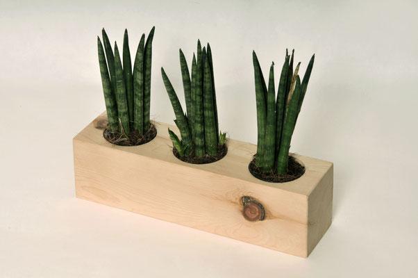 Pflanzenübertopf aus Zirbe natur inkl. Glaseinsatz 3x in Ø ca. 6cm (auch als Vase geeignet)
