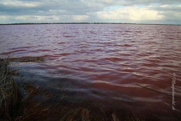 the pink lake