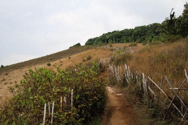 Kurz-Trekking in Doi Inthanon