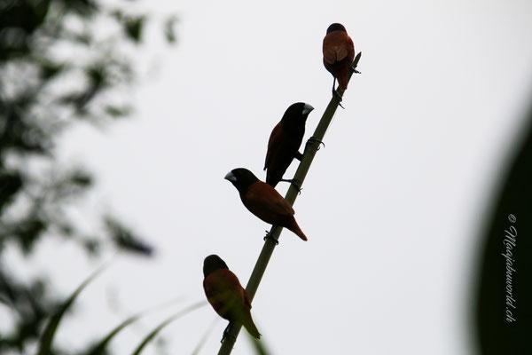 Hier auf dem Balkon kann man diese Vögel beobachten! / On the balcony you can observe this birds!