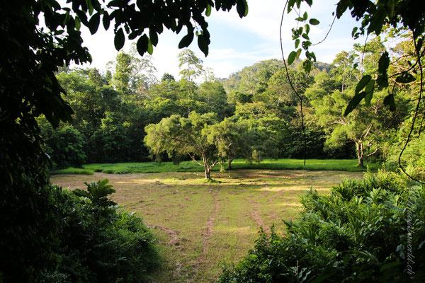 Taman Negara Malaysia Aussichtsplattform / View point