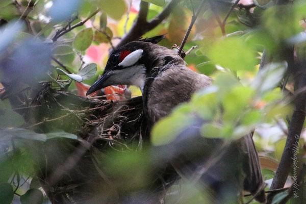 Es sieht aus, als ob die Mutter zuhört was die Kleinen zu sagen haben. / It looks like she is listening to what the babybird say!