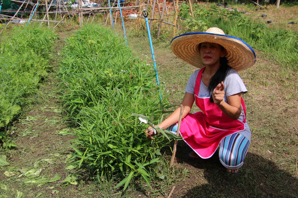 Gartenkunde mit Pukky
