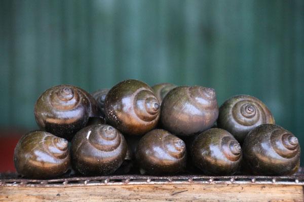 Schnecken?! Naja... wird nicht mein Lieblingsessen, aber zum probieren wars ok! / Snails won't be my favorite, but to try them was ok!