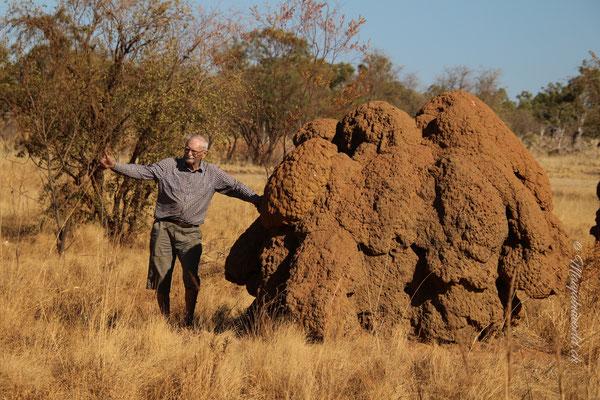 ...termite ill stop for Grant