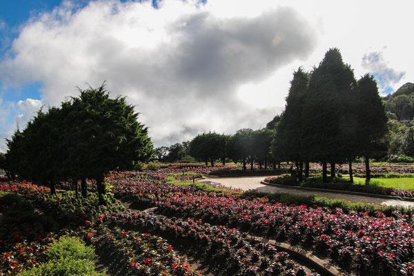 Queens Garden!