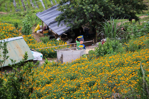 Als Nebensaison Produkt werden hier Magnolien gepflanzt.