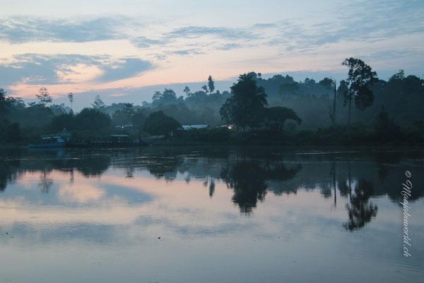 Morgenstimmung Kinabatangan / Morning at Kinabatangan!