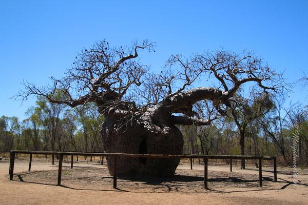 ...prison Tree!