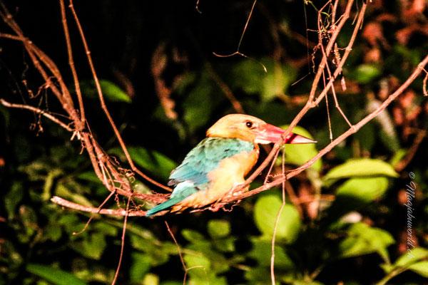 Juhui... ein Kingfisher!