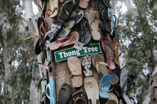 Flip Flop Tree