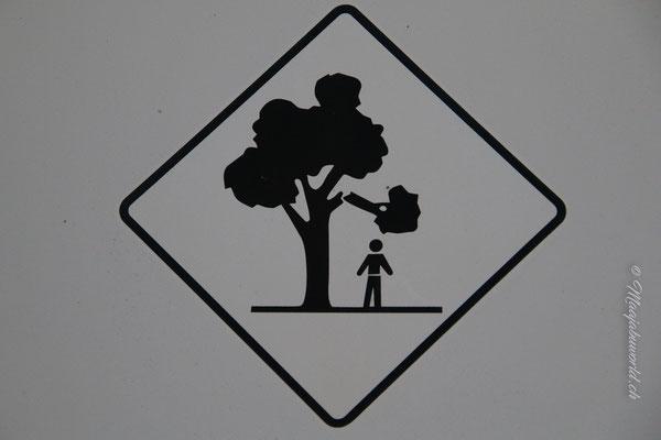 Hier hat es gefährliche Bäume! / Dangerous trees!